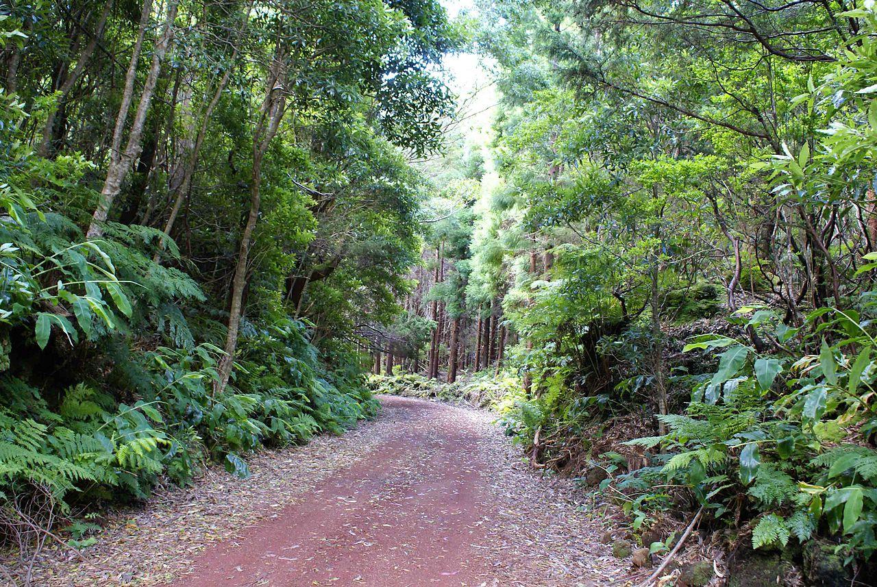 home Home 1280px Floresta da ilha Terceira mistura entre a Laurisilva e as plantas introduzidas A  ores Portugal
