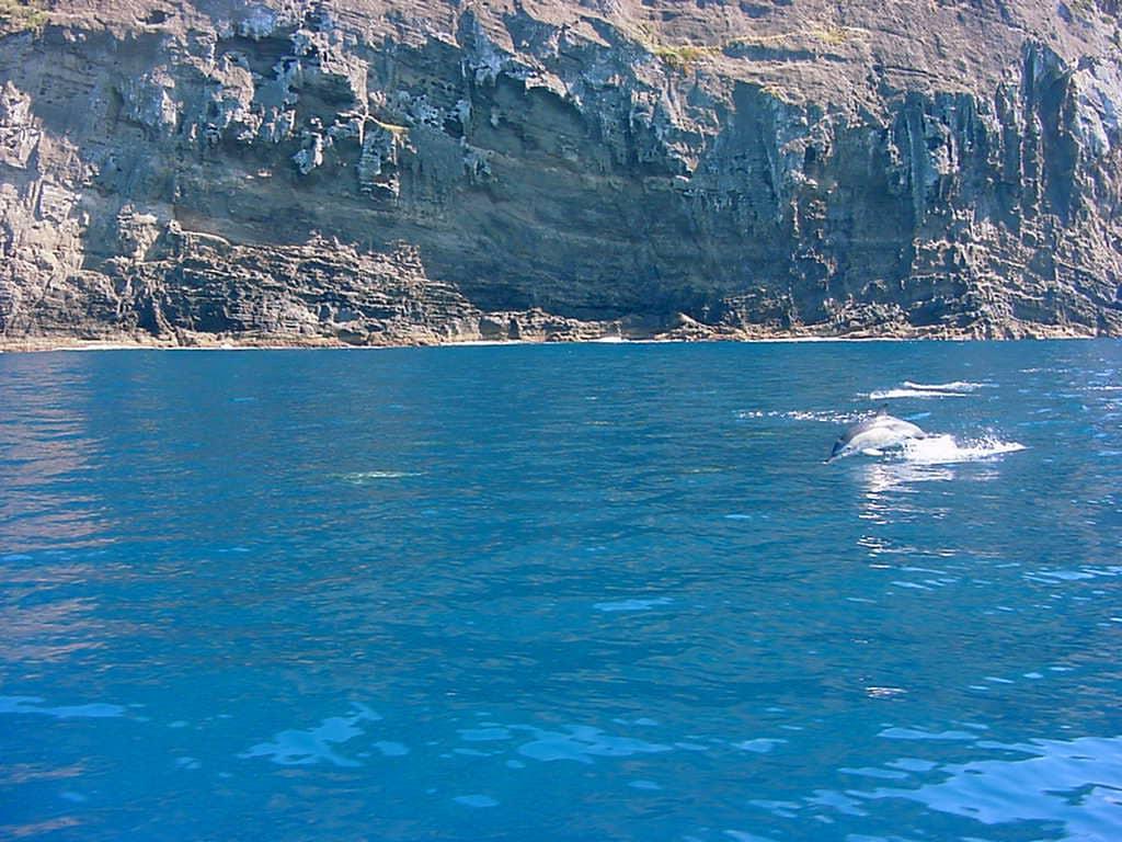 home Home Golfinhos junto ao Monte Brasil ilha Terceira A  ores